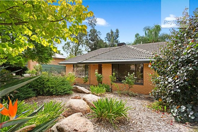 Picture of 20 Cremin Street, FAIRVIEW PARK SA 5126