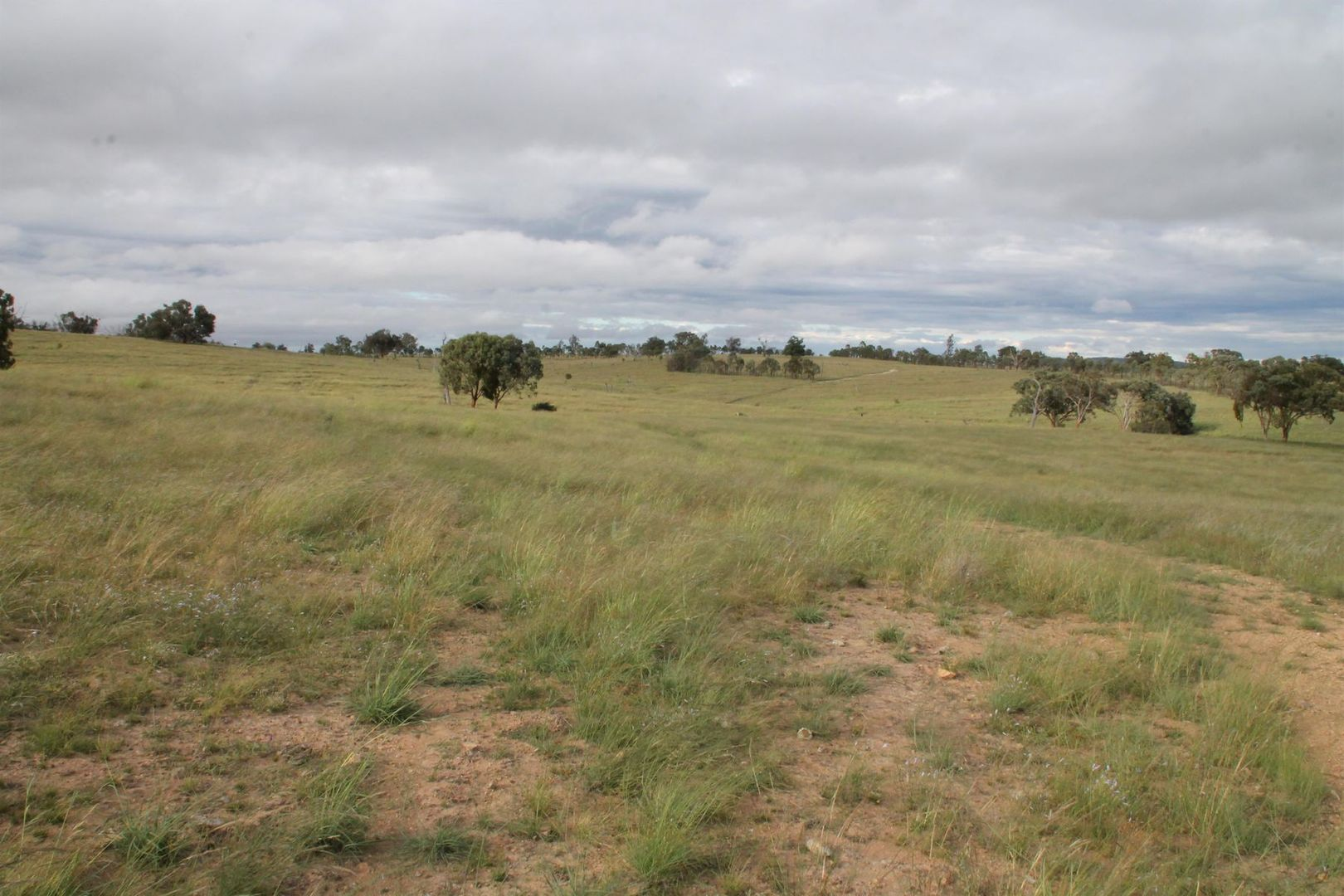 Lot 2 Mole Station Road, Tenterfield NSW 2372, Image 2