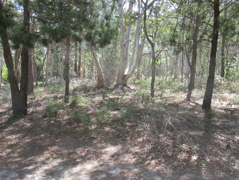 8 Parakeet Street, Macleay Island QLD 4184, Image 0