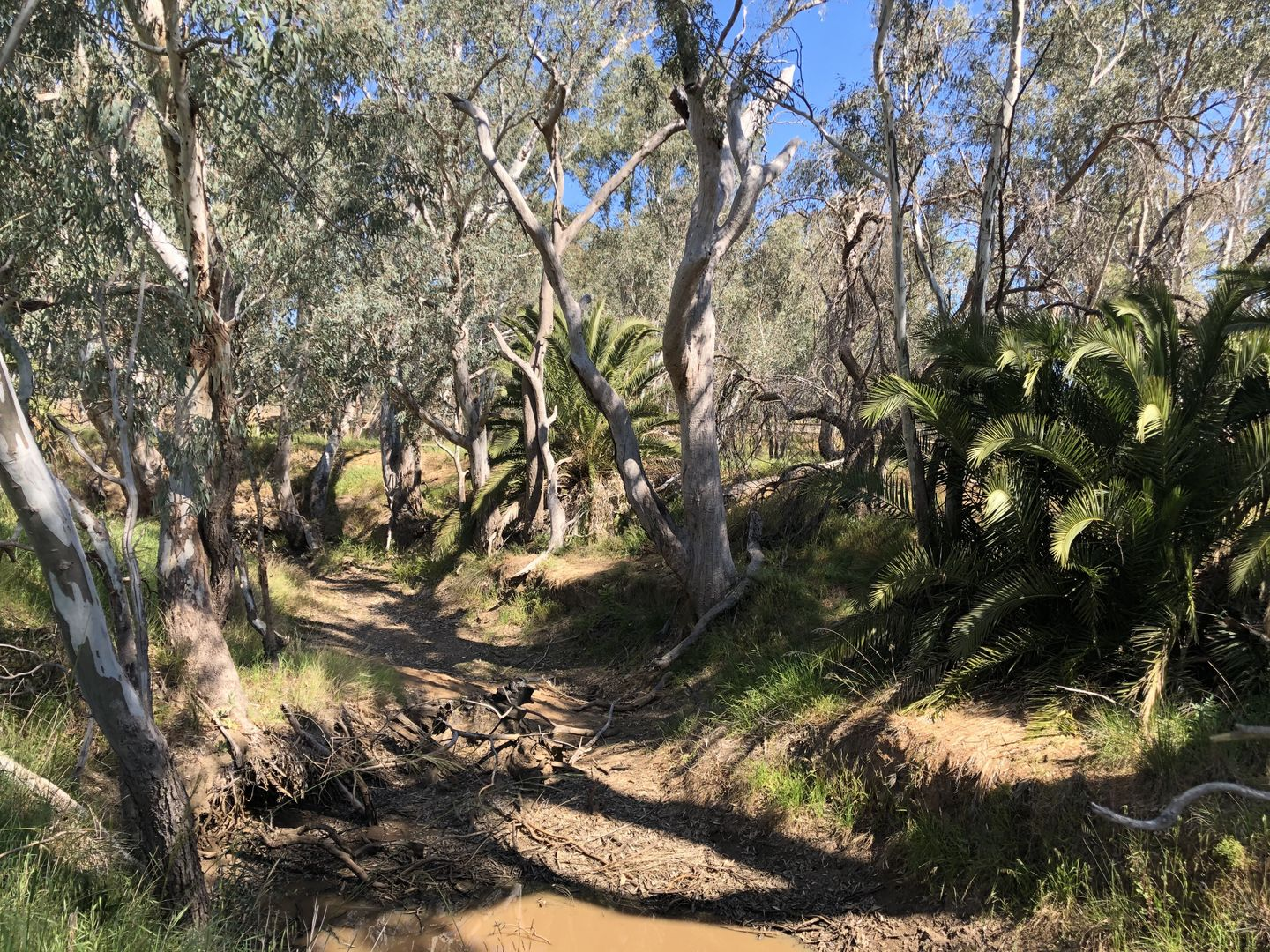 Lot 7 Adams Street, Marong VIC 3515, Image 2