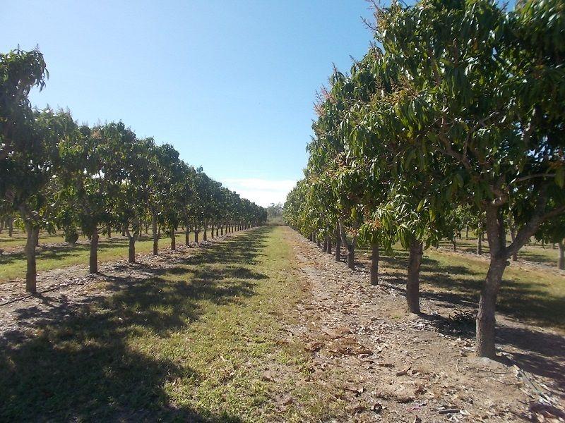 259 Murray Road, Woodstock QLD 4816, Image 1