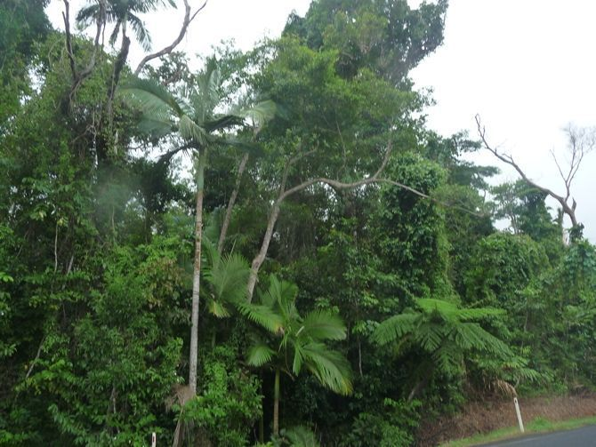 Lot 113 Tully Mission Beach Road, Wongaling Beach QLD 4852, Image 0