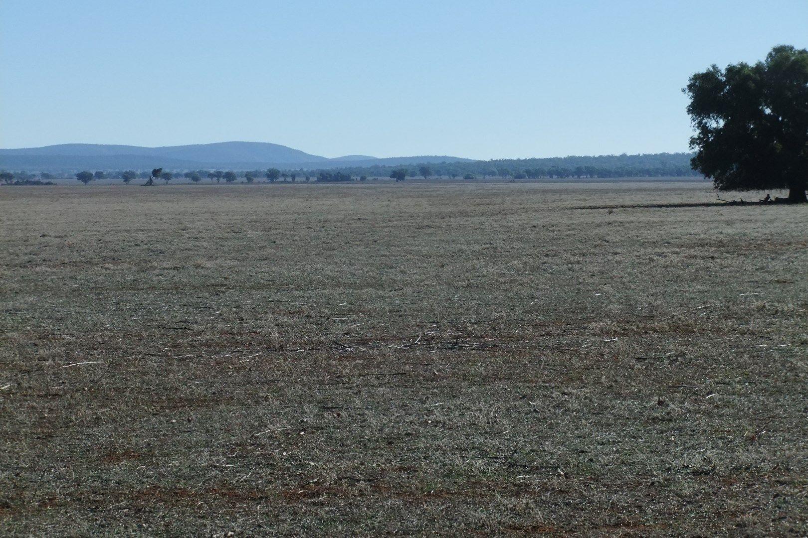 Rankins Springs NSW 2669, Image 2