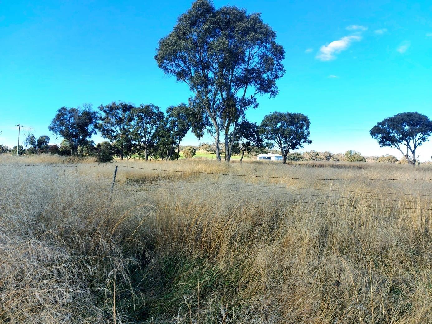 Part 44 Barleyfields Road, Uralla NSW 2358, Image 2
