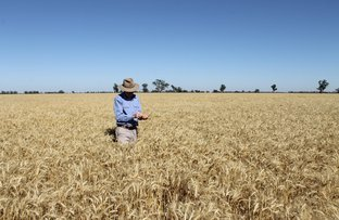 Picture of Award Winning Narromine Cropping Country, Dandaloo NSW 2823