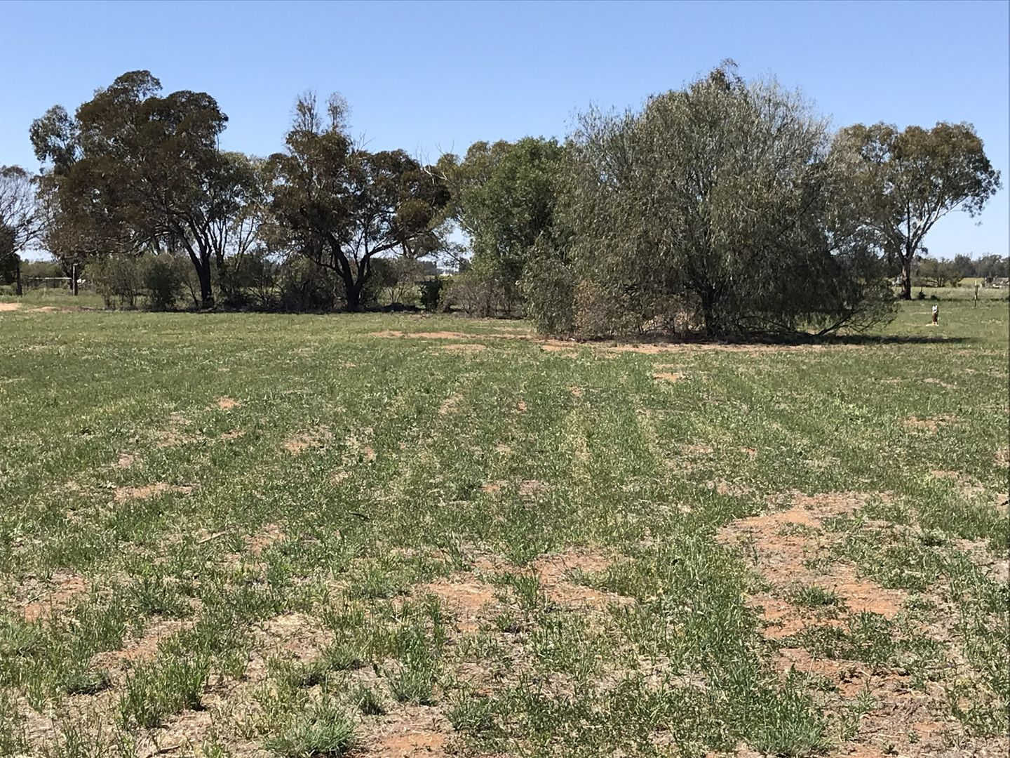 Lot 3 and 12 National Park Road, Curban NSW 2827, Image 2