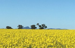 Picture of 'Iowa' 88 Carters Lane, Henty NSW 2658