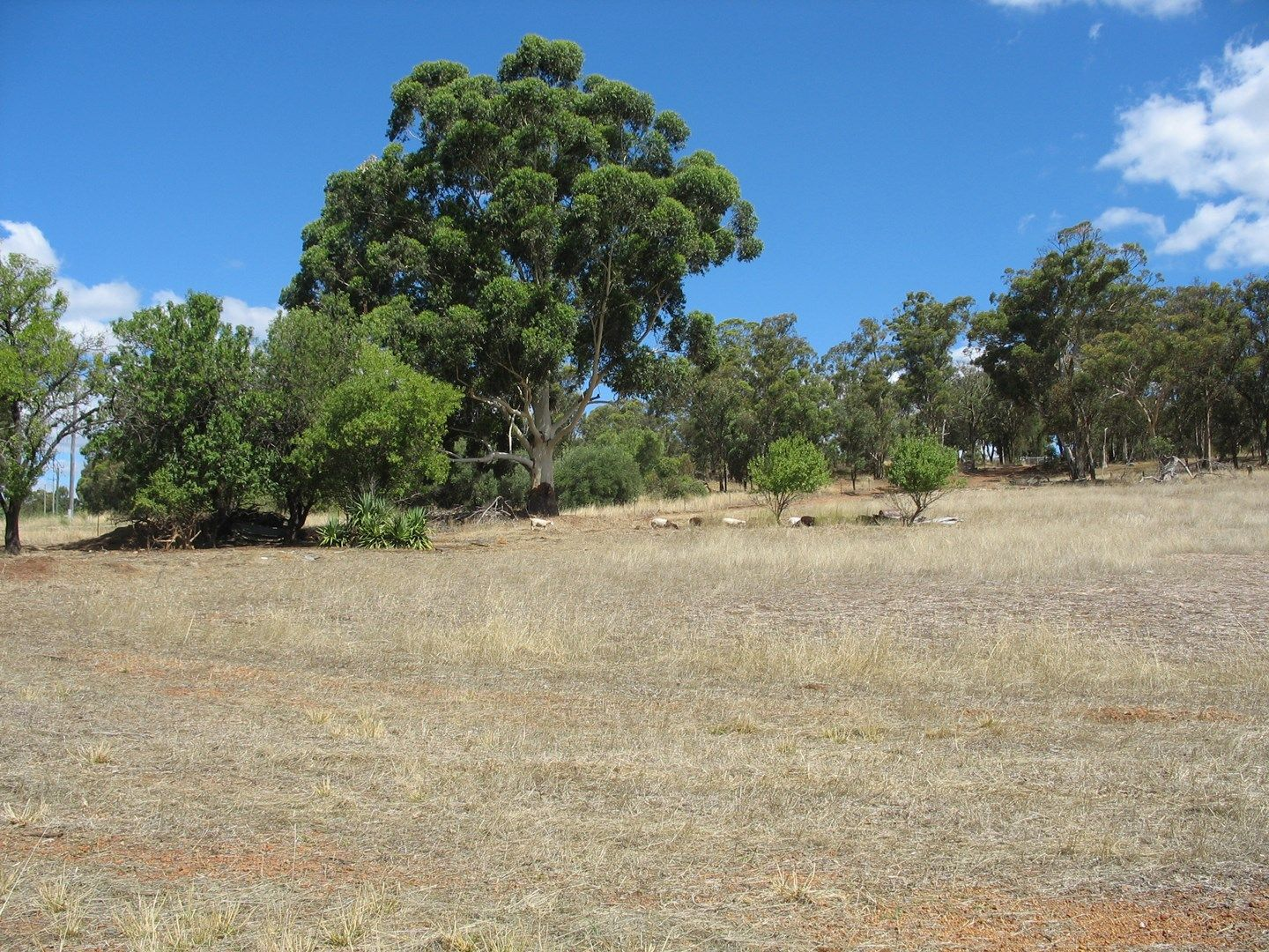 Lot 202 Werribee Road, Wundowie WA 6560, Image 0