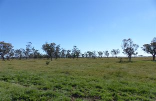 """Picture of . """"Victo"""", Cunnamulla QLD 4490"""