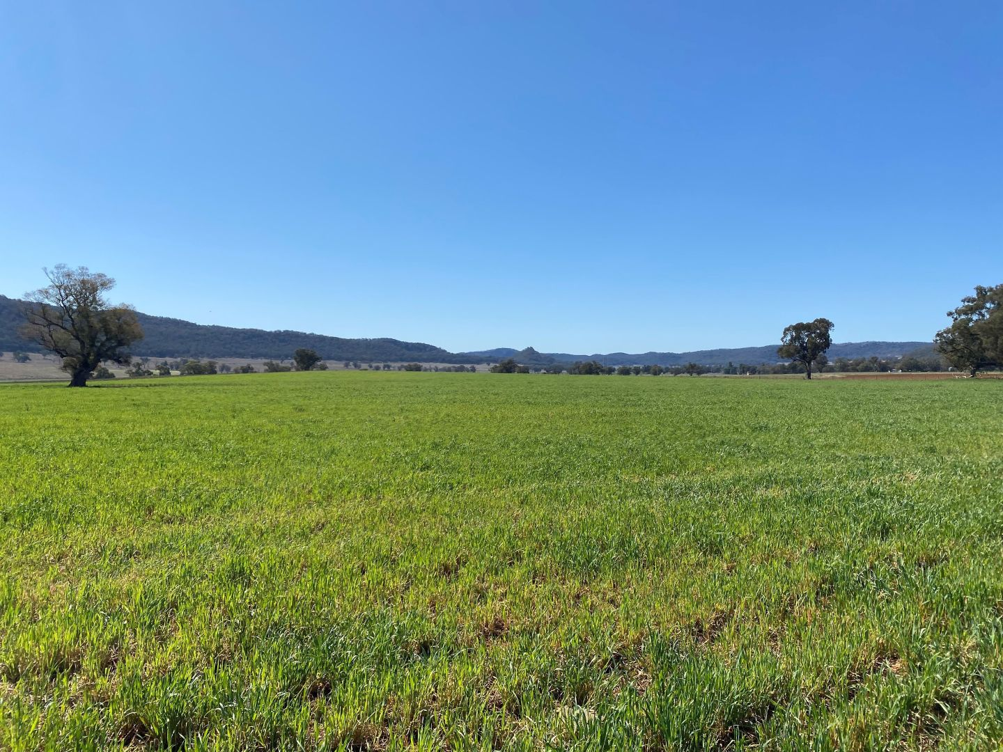 7458 Bylong Valley  Way, Mudgee NSW 2850, Image 2
