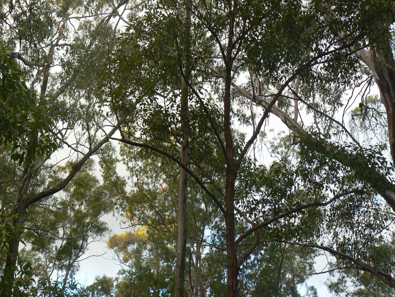 Lot 28 Gilliland Crescent, Blackbutt QLD 4314, Image 1
