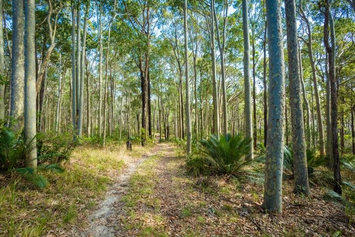 Lot 54 Duesbury Road, Dalmeny NSW 2546, Image 2