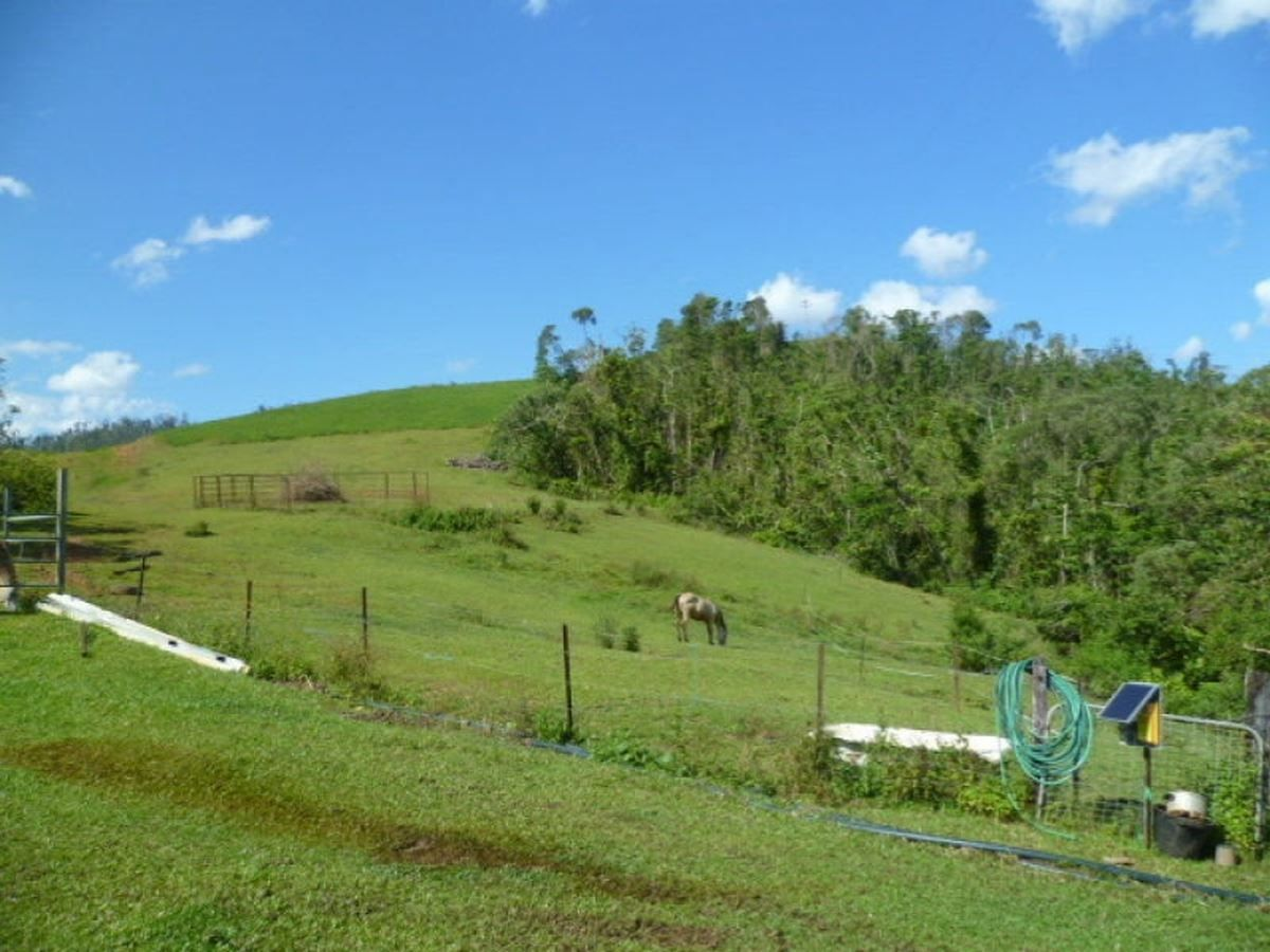 Mena Creek QLD 4871, Image 1