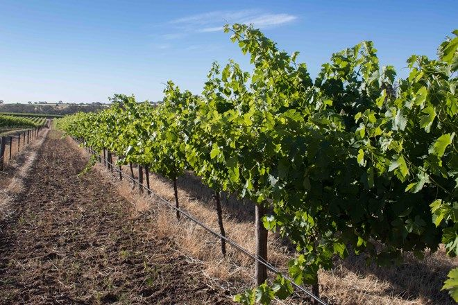 Picture of Barossa Valley Way, ROWLAND FLAT SA 5352