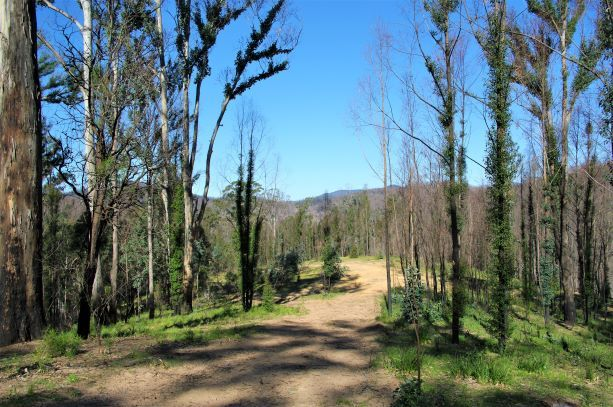Lot 380 New Station Creek Road, Wyndham NSW 2550, Image 0