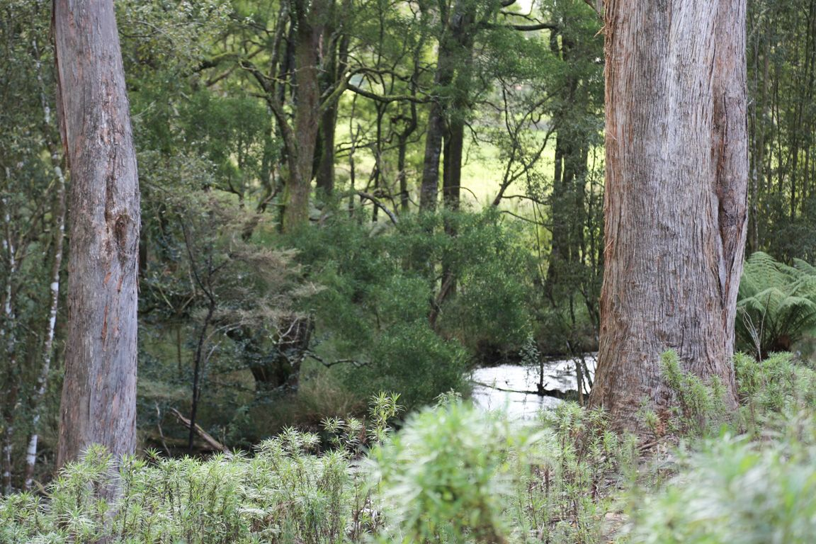 4, 32 Twin Creeks Road, Mengha TAS 7330, Image 0