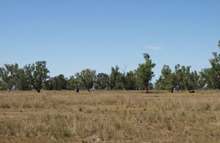 Picture of Cottonwood, Quirindi NSW 2343