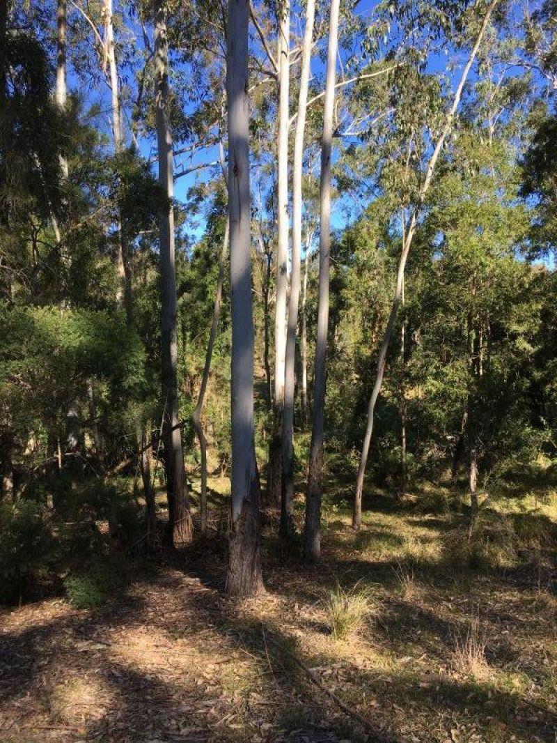 268 Six Mile Rd, Eagleton NSW 2324, Image 2
