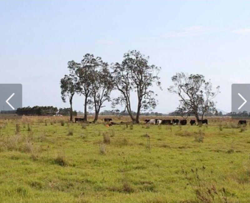 Lot 10/258 Left Bank Road, Kinchela NSW 2440, Image 1