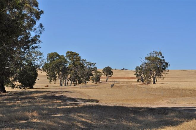 Picture of ' Rhodesdale', DARKAN WA 6392