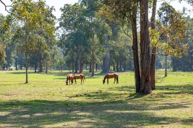 Picture of 735 Mandalong Road, MANDALONG NSW 2264