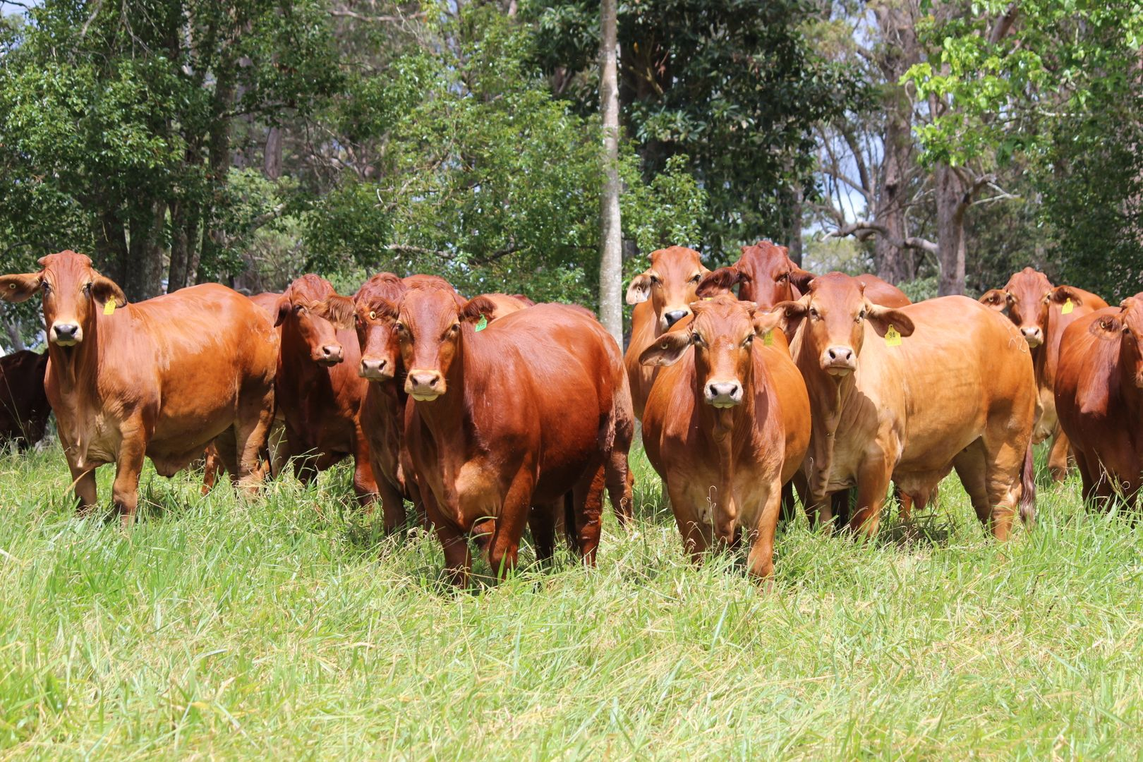 'HILLVIEW' FOR SALE BY AUCTION 20th MAY 2021, Upper Barron QLD 4883, Image 0