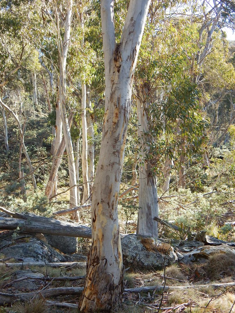 Lot 48 Tea Tree Swamp, Bredbo NSW 2626, Image 2