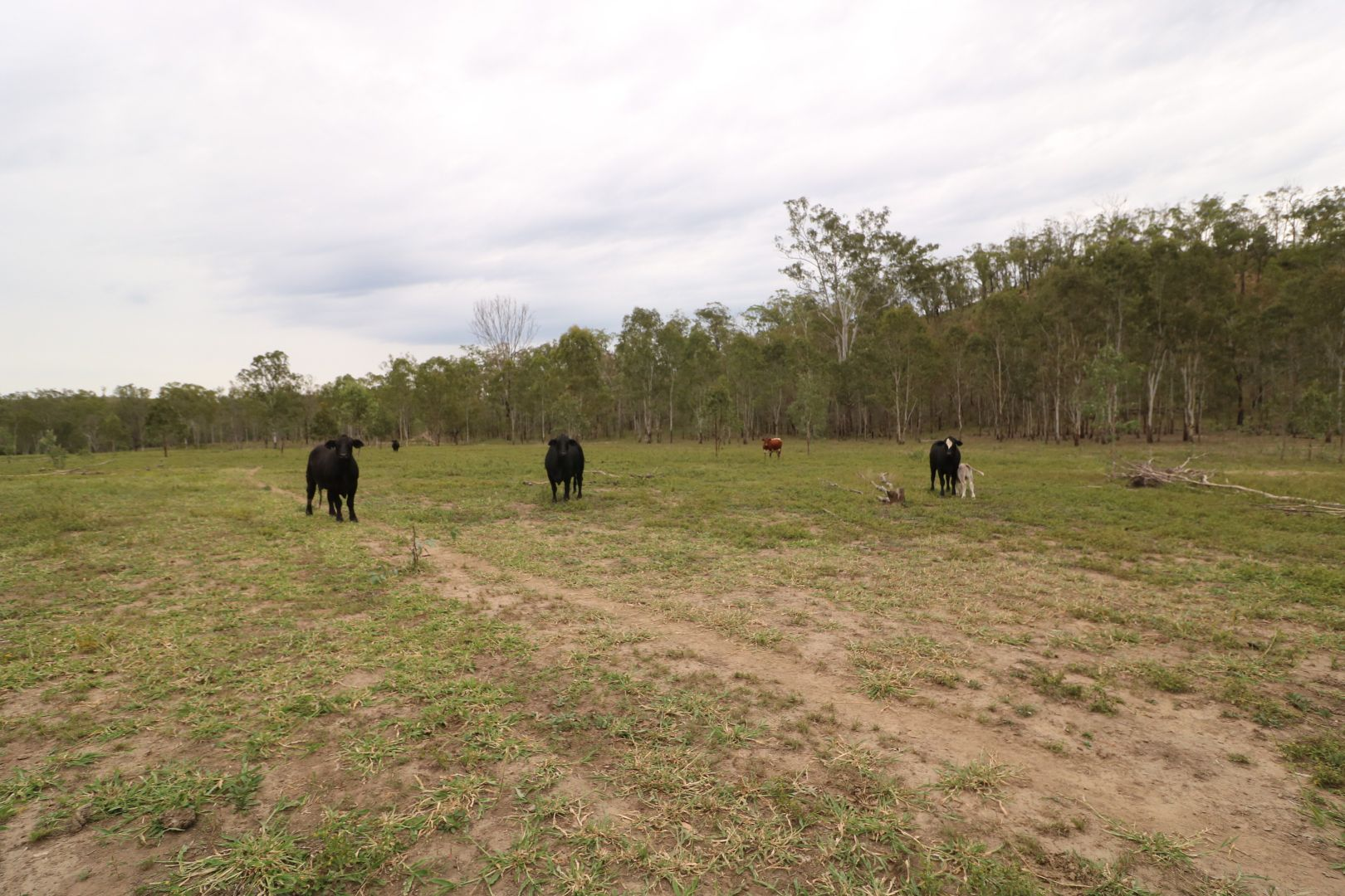 L161 Old Booyal  Road, Dallarnil QLD 4621, Image 1