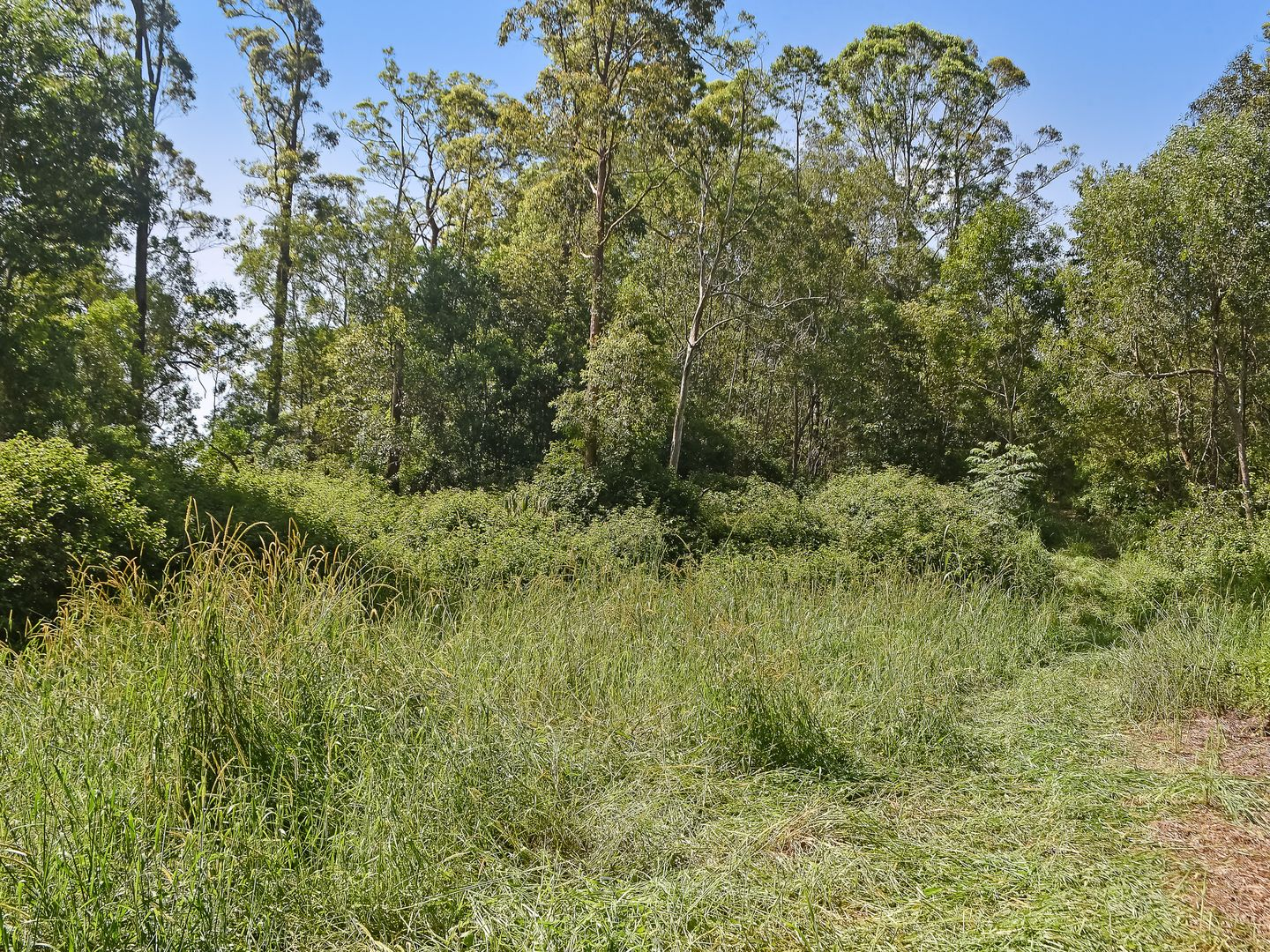 Armstrong Creek QLD 4520, Image 2