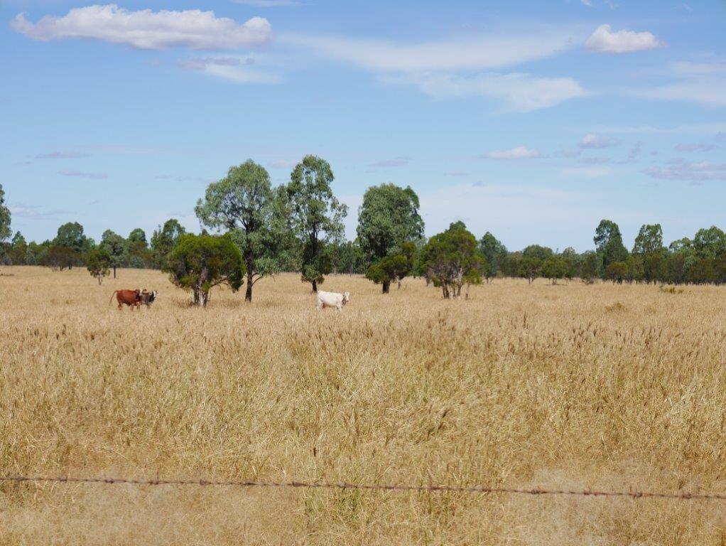 581 ACRES GRAZING LIFESTYLE, Cecil Plains QLD 4407, Image 0