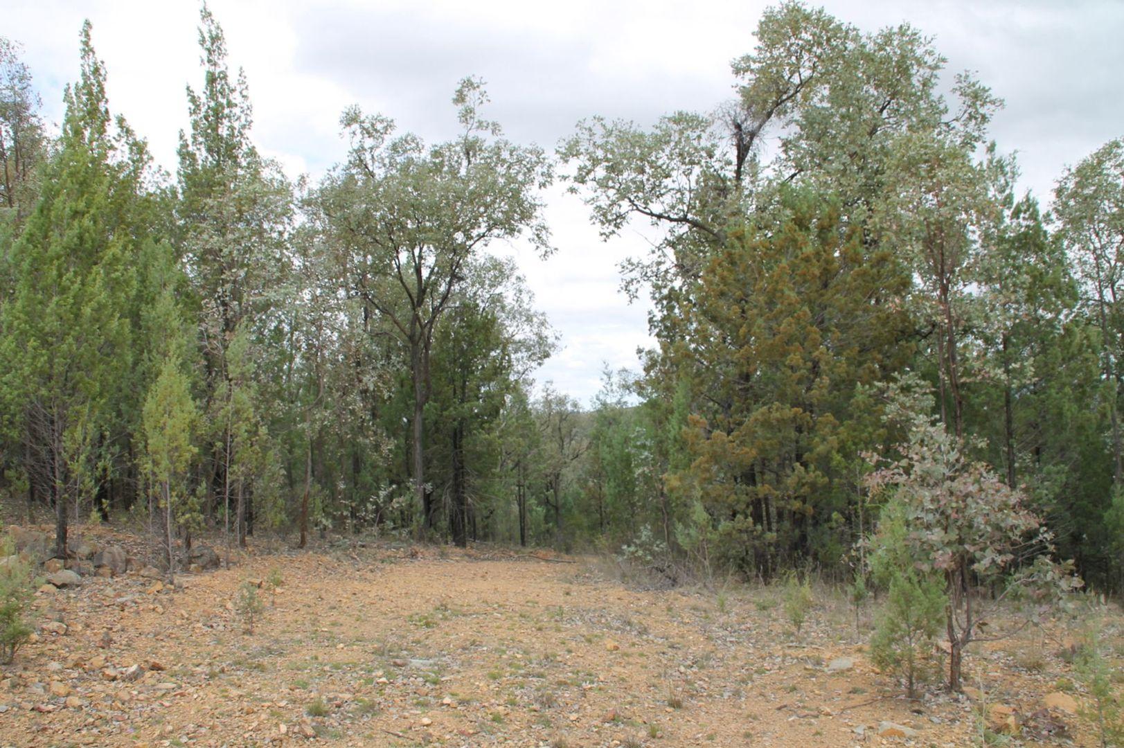 Lot 19 Mountain Creek Road, Tenterfield NSW 2372, Image 2