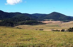 Everinghams Road, Dorrigo NSW 2453