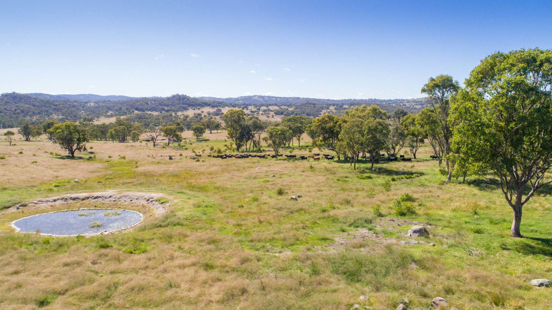 262 Gunnalong Rd, Bendemeer NSW 2355, Image 2