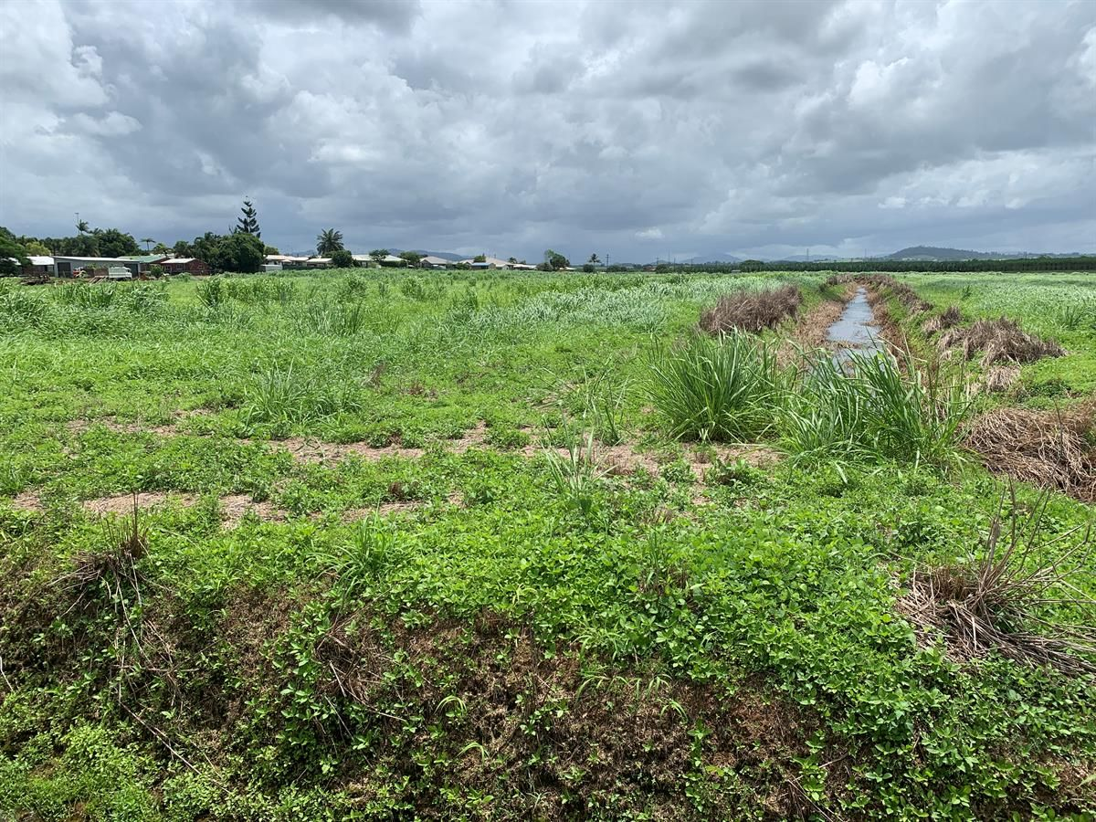 Lot 4 Cardier Road, Wangan QLD 4871, Image 1