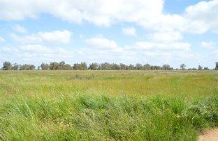 Picture of Euroka Morangarell Road, Quandialla NSW 2721
