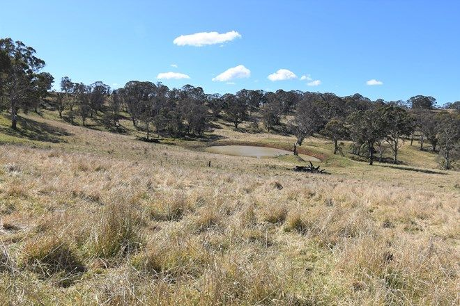 Picture of 489 Inn Road, BEN LOMOND NSW 2365