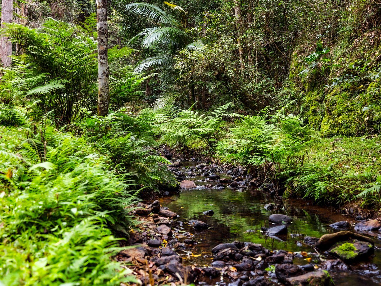 114 CROOKS VALLEY ROAD, Crystal Creek NSW 2484, Image 2