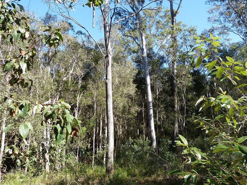 Lot 80 of 1873 Mungar Rd, Pioneers Rest QLD 4650, Image 1
