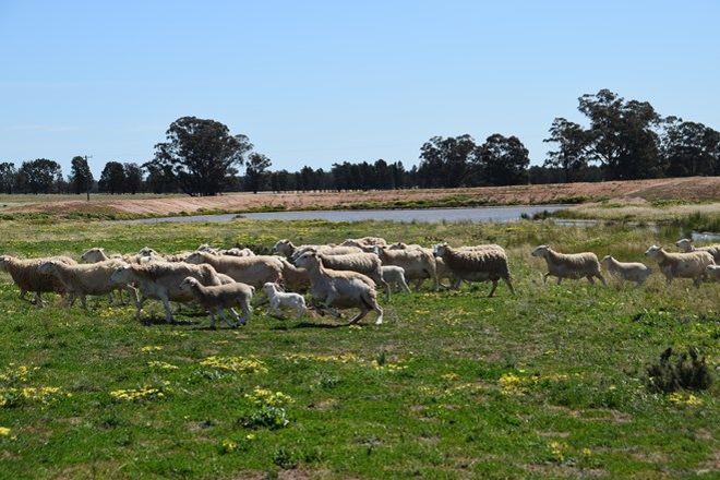 Picture of 'Windeena' 802 Milpulling Road, GILGANDRA NSW 2827