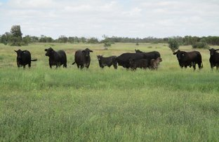 Picture of 2476 ACRES GRAZING PROPERTY, Tara QLD 4421