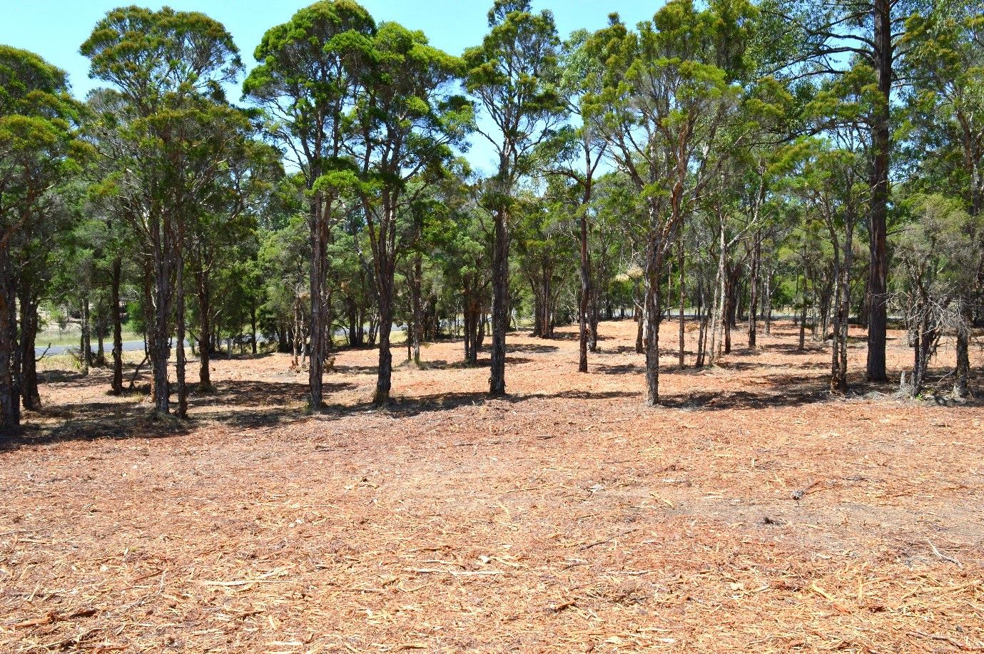 706 Sandy Creek Road, Quorrobolong NSW 2325, Image 2