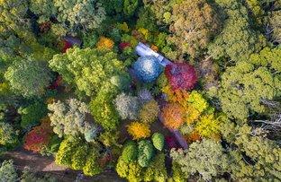 Picture of 17-21 Wynnes Rocks Road, Mount Wilson NSW 2786