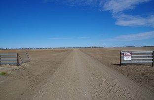 Picture of 1416 Marlbone Road, Burren Junction NSW 2386