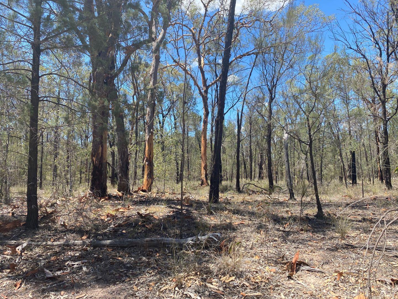 L2 L Tree Creek Road, Kowguran QLD 4415, Image 1