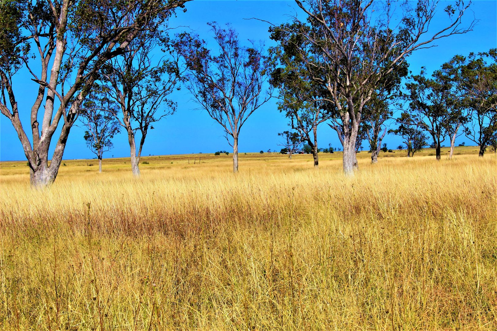 0 Plain Farm, Roma QLD 4455, Image 2