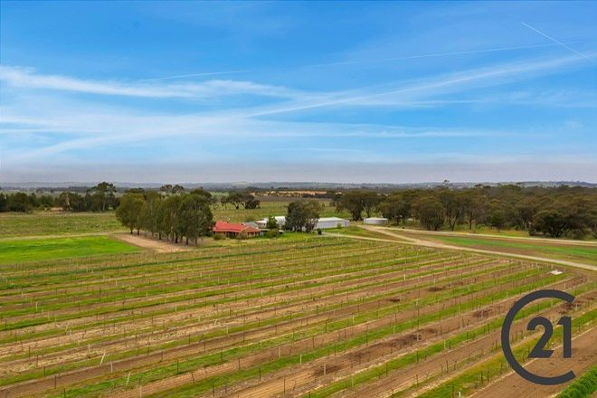Picture of 156 Belvidere Rd, NURIOOTPA SA 5355