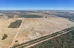 Picture of Chinchilla QLD 4413