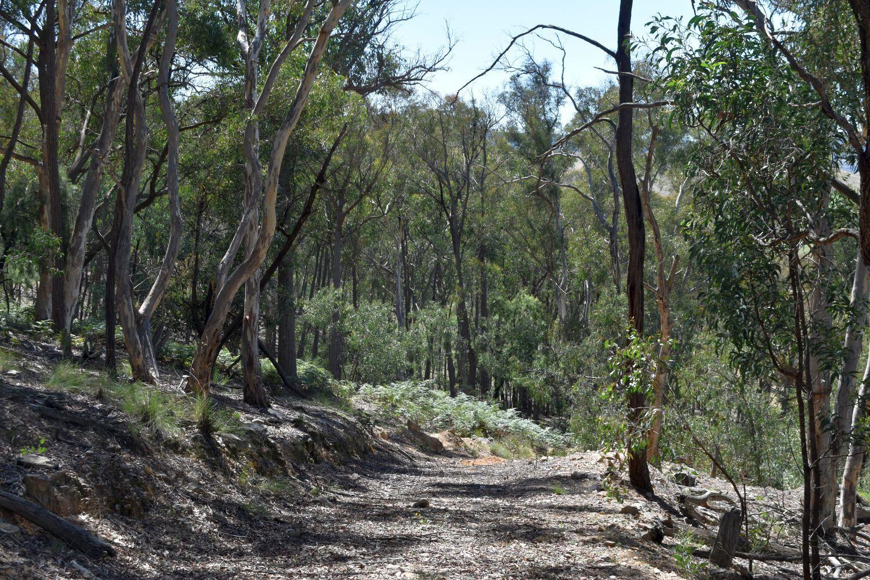 Phoenix Road, Currawang NSW 2580, Image 2