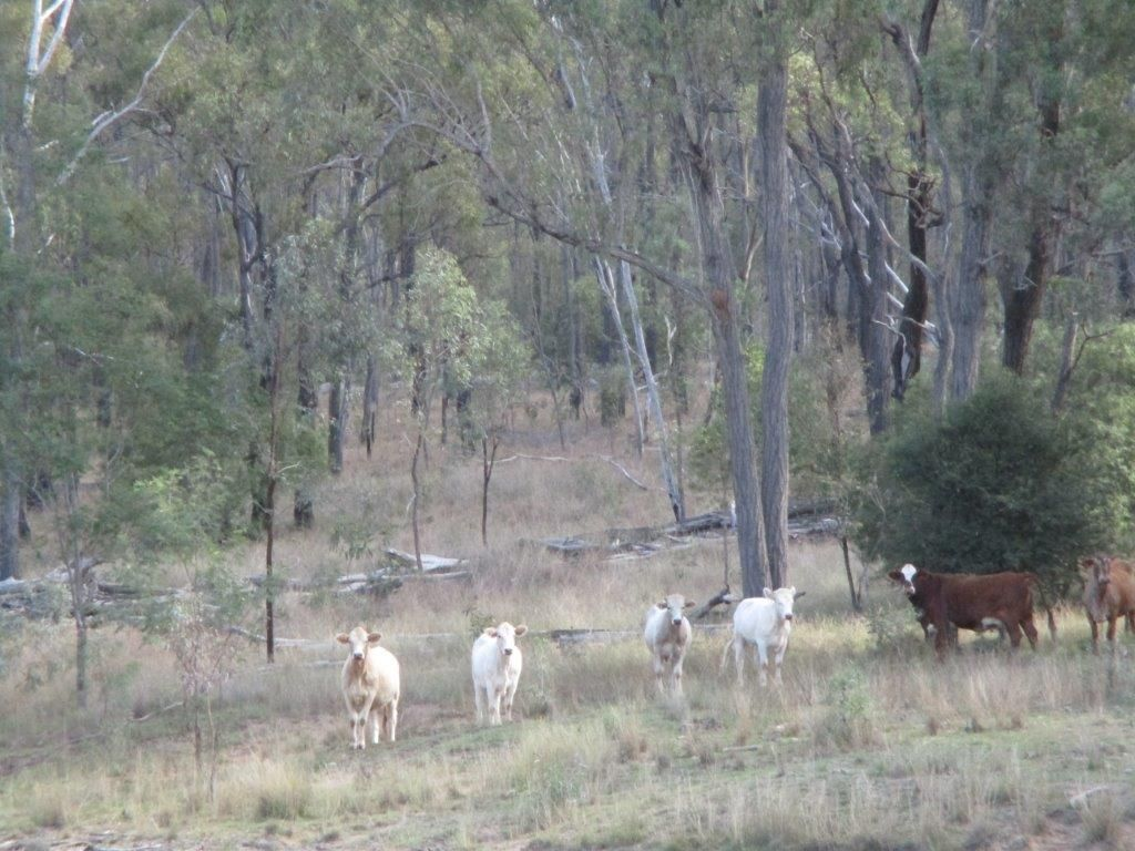 1264 ACRES BREEDER COUNTRY, Durong QLD 4610, Image 0