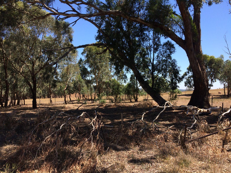 LOT 3 KINGSVALE ROAD, Kingsvale NSW 2587, Image 1